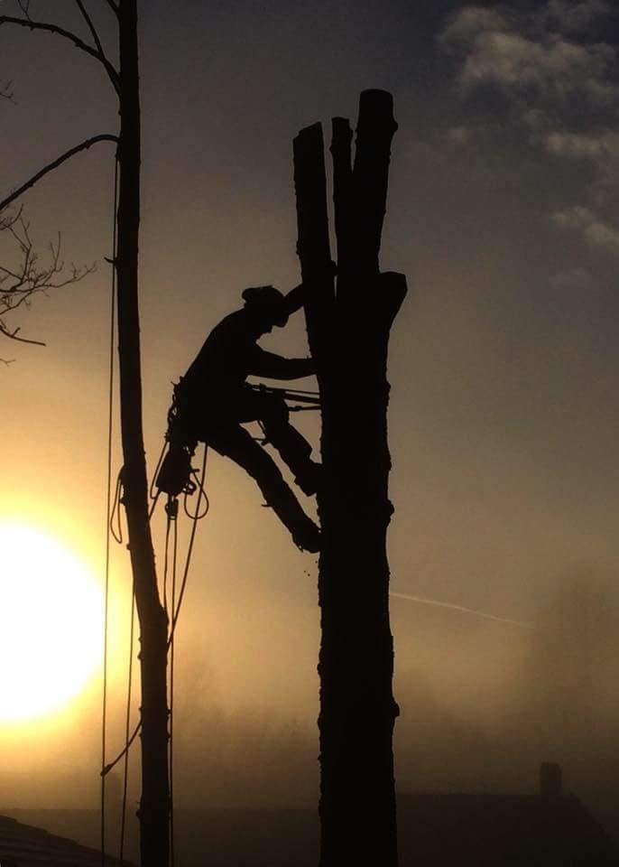 ulovlig felling trær